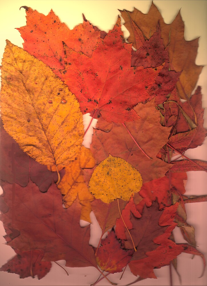 Autumn Leaf Collection 11 by Gene Cyr