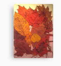 Autumn Leaf Collection 11 Canvas Print