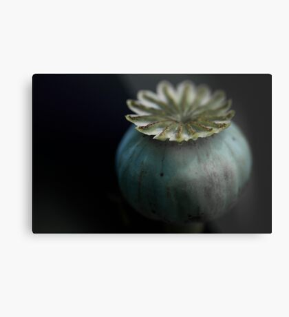 Patterns in Nature - The Poppy Metal Print