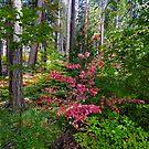 Yosemite Dogwood Fall by photosbyflood