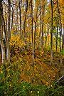 Fall Sabrina Lake Overflow Area by photosbyflood