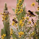 Birds of a Feather Do Flock Together.... by mwmclaren