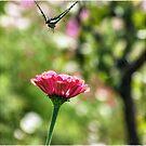 Fly Away by kibishipaul