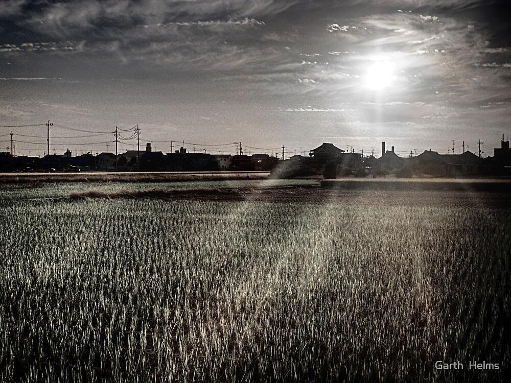 Rice field, mid-harvest, Masaki by Garth  Helms