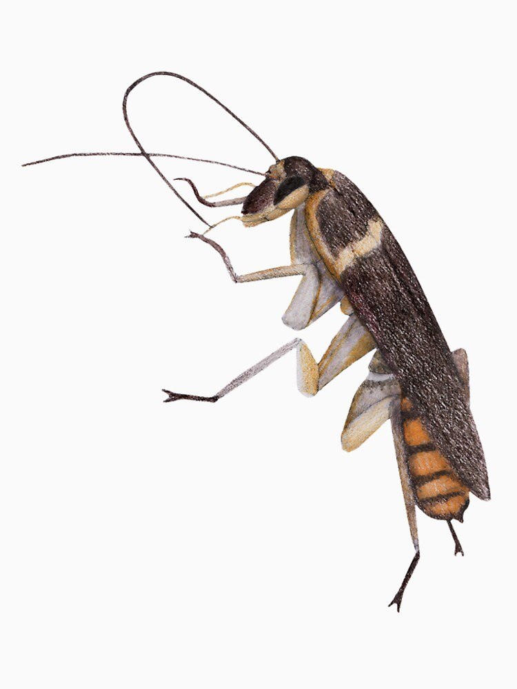Cockroach by lindaursin