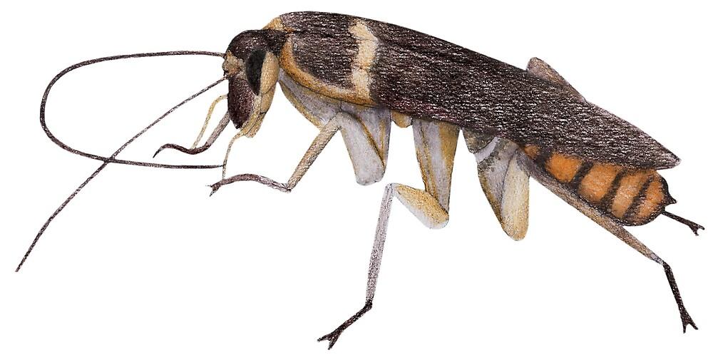 Cockroach by Linda Ursin