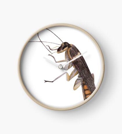 Cockroach Clock