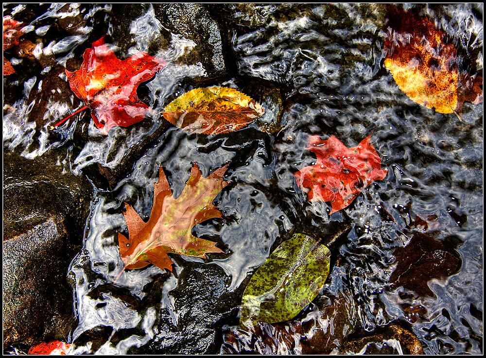 Creek Leaves by Branko  Marinic