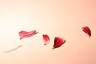 Romance by Victoria Kidgell