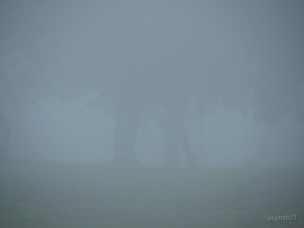 trees in the fog by jaymeb21