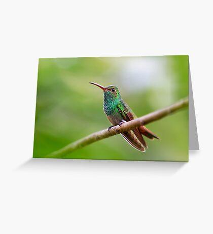 Rufous-tailed hummingbird - Costa Rica Greeting Card