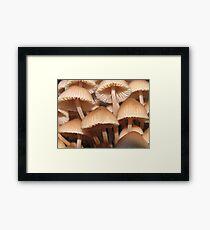 funghi Framed Print