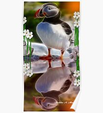 THE NEWFOUNDLAND PUFFIN Poster