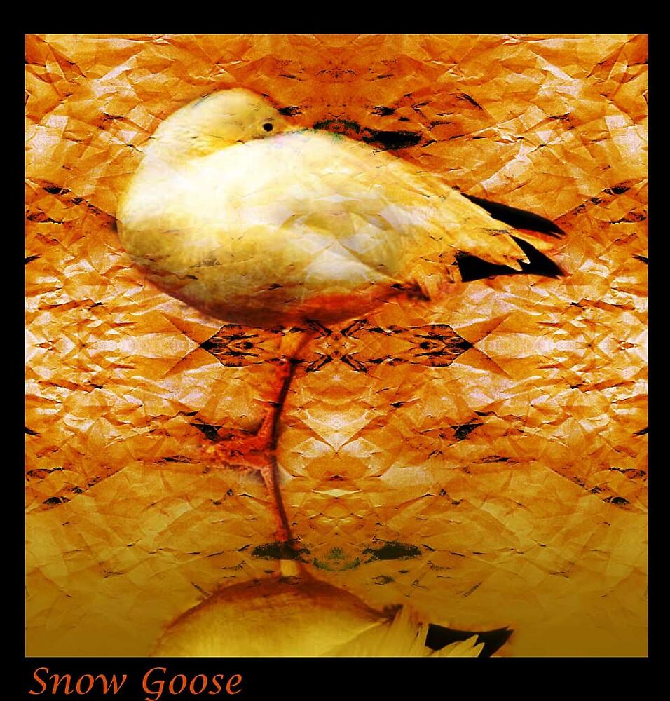 Snow Goose by milton