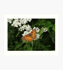 The American Painted Lady Art Print