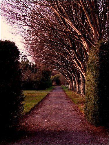 Purple Trees by crazytinetty