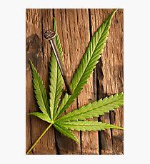 Marihuana leave Photographic Print