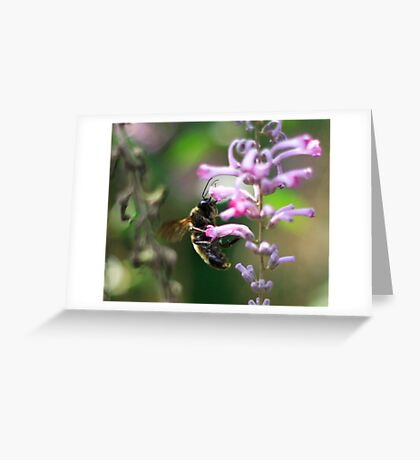 Warm summer's day Greeting Card