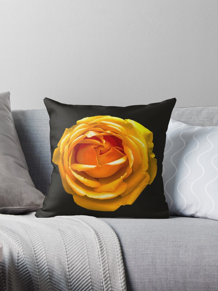 Peach Orange Rose by Dave  Knowles