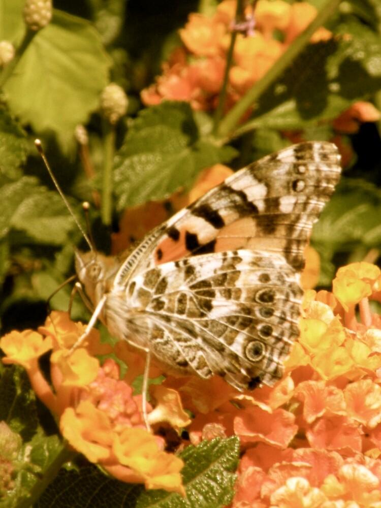 Monarch Butterfly by Bonnie Pelton