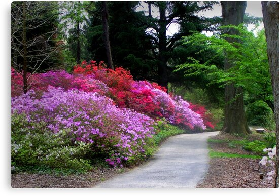 The Garden Path by Kathy Weaver