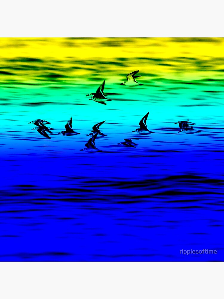 Sanderlings flying by ripplesoftime