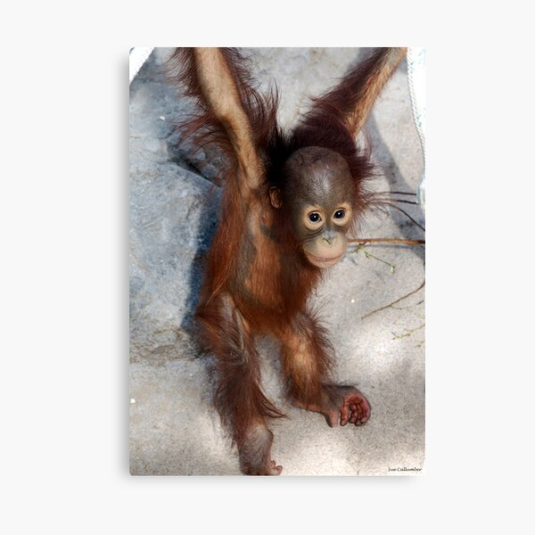 Hanging Around Canvas Print