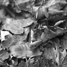 Monocrome Autumn Leaves by SylviaHardy