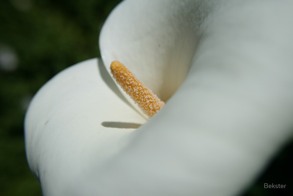 Hibiscus 1 by Bekster