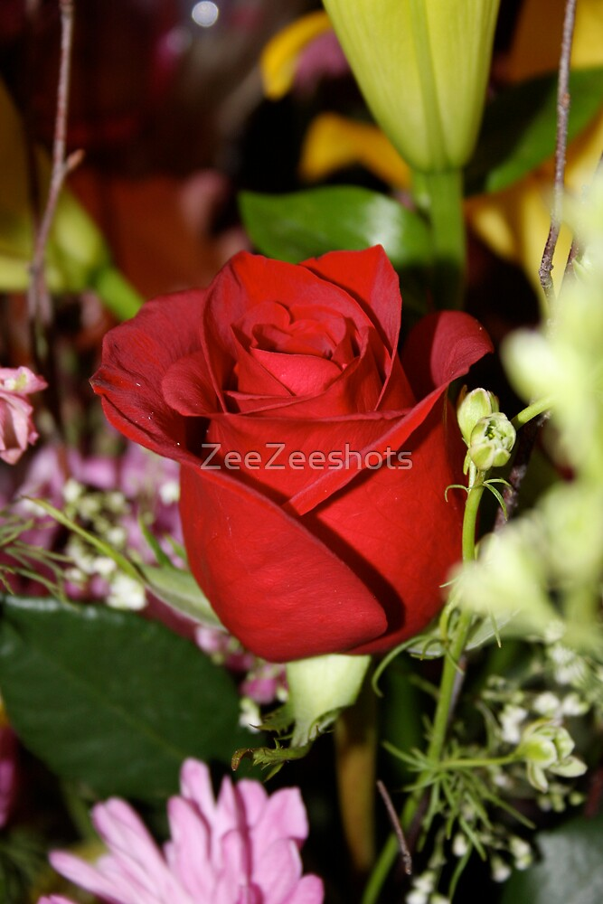 Another Rose by ZeeZeeshots