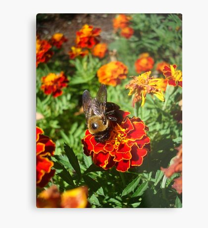 Farewell to Fall - a very handsome Bumbleboy Metal Print