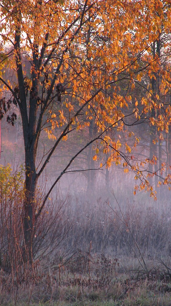 'Autumn morning' by Petri Volanen