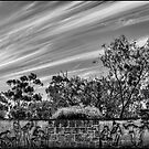 Kings Park by SPQQKY