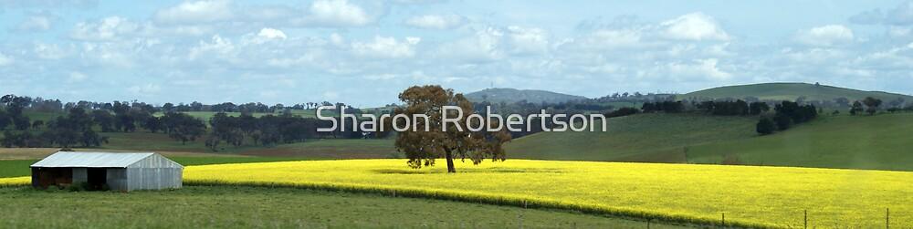 Canola Fields by Sharon Robertson