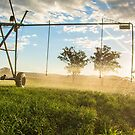 Irrigation Evening by Candice O'Neill