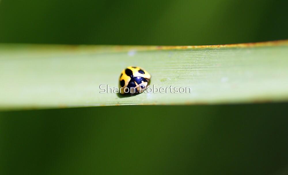 Sleeping Ladybug by Sharon Robertson