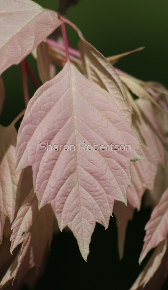 Pink Leaf by Sharon Robertson