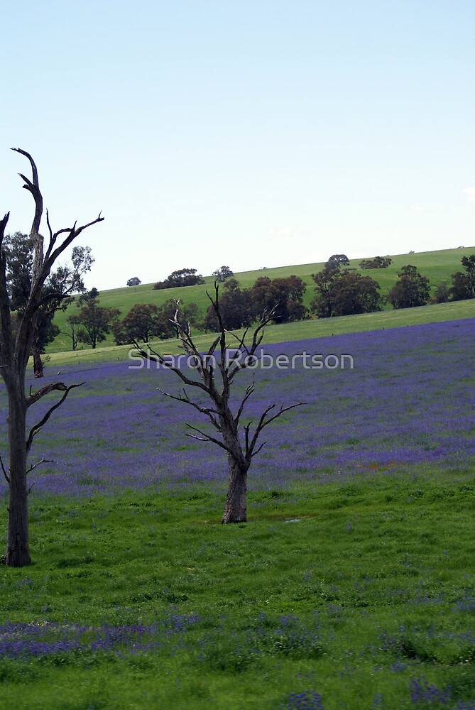 Trees in Purple by Sharon Robertson