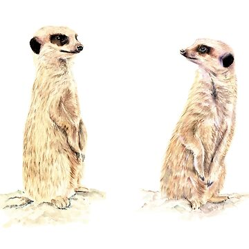 Two Meerkats by artlilly