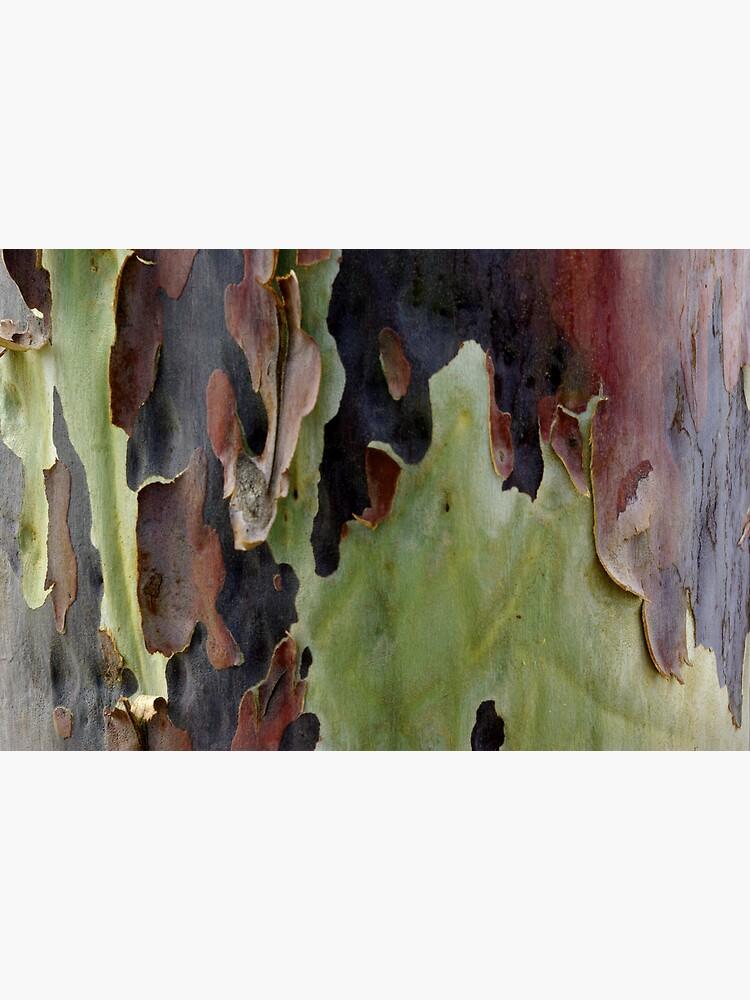 Blistering Gum Bark by alexsupertramp