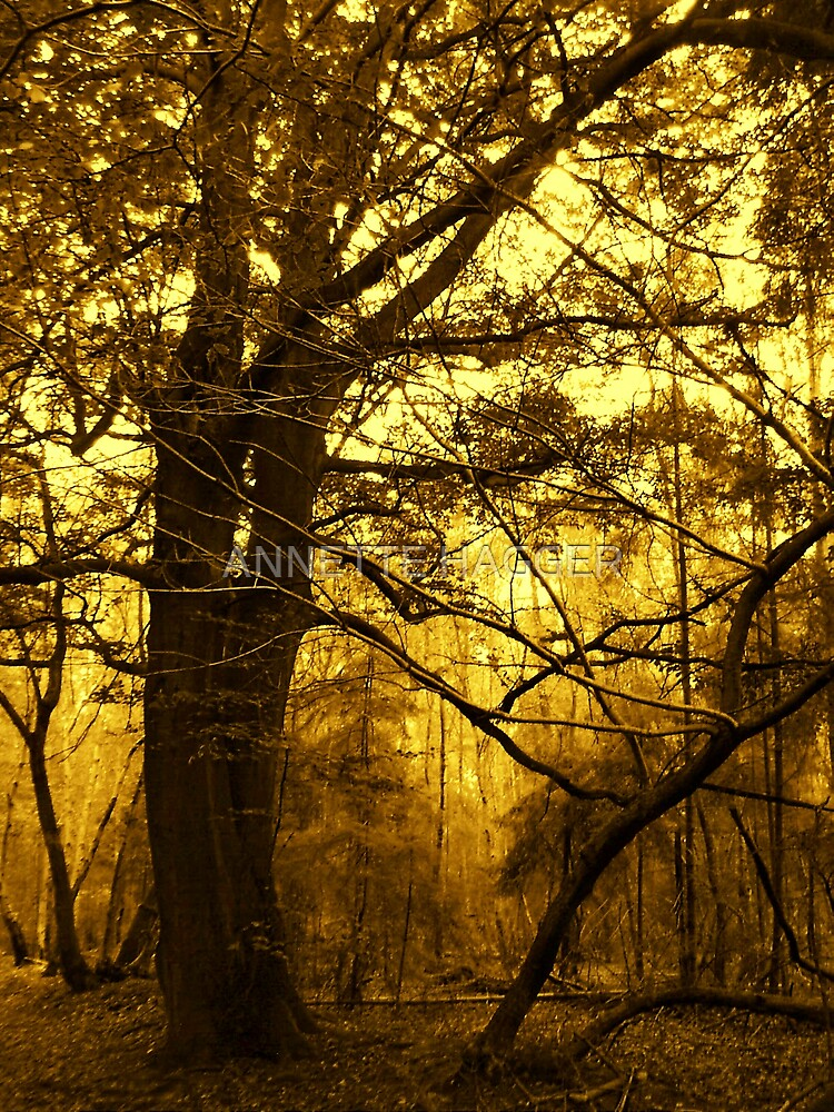 DANBURY WOODS IN SEPIA by ANNETTE HAGGER