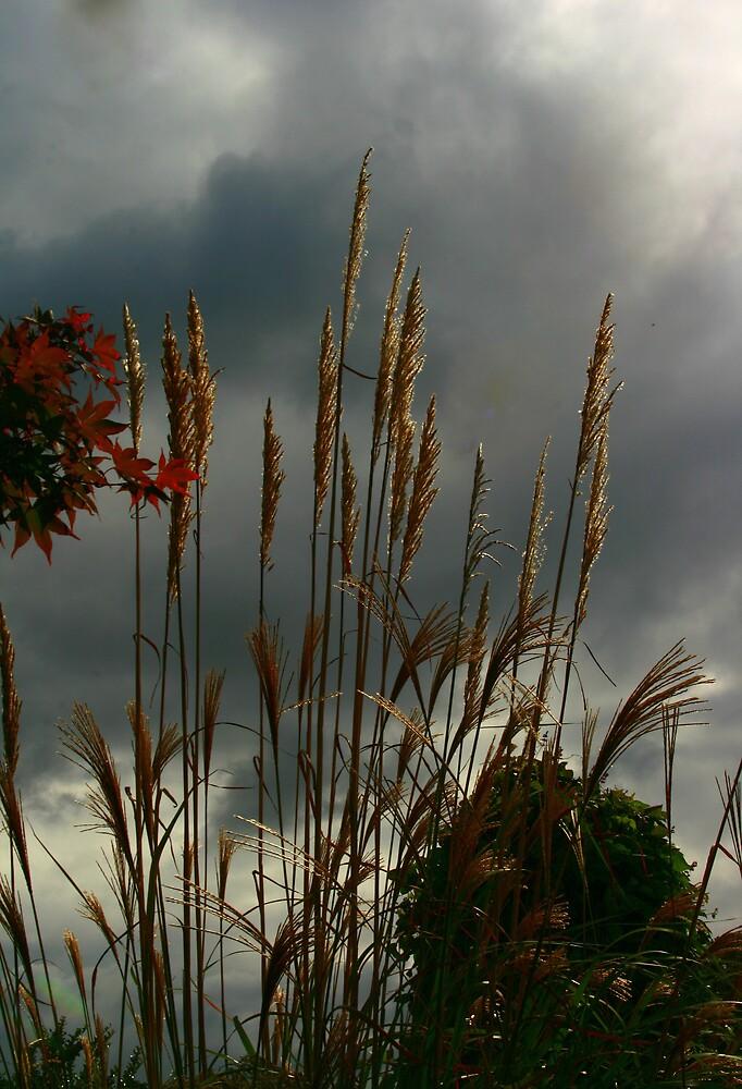 Pompas Grass by sherryk