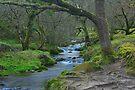Woodland Stream Dartmoor by DonDavisUK