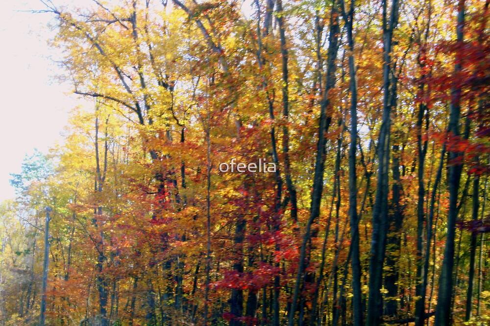 beautiful blur  by ofeelia