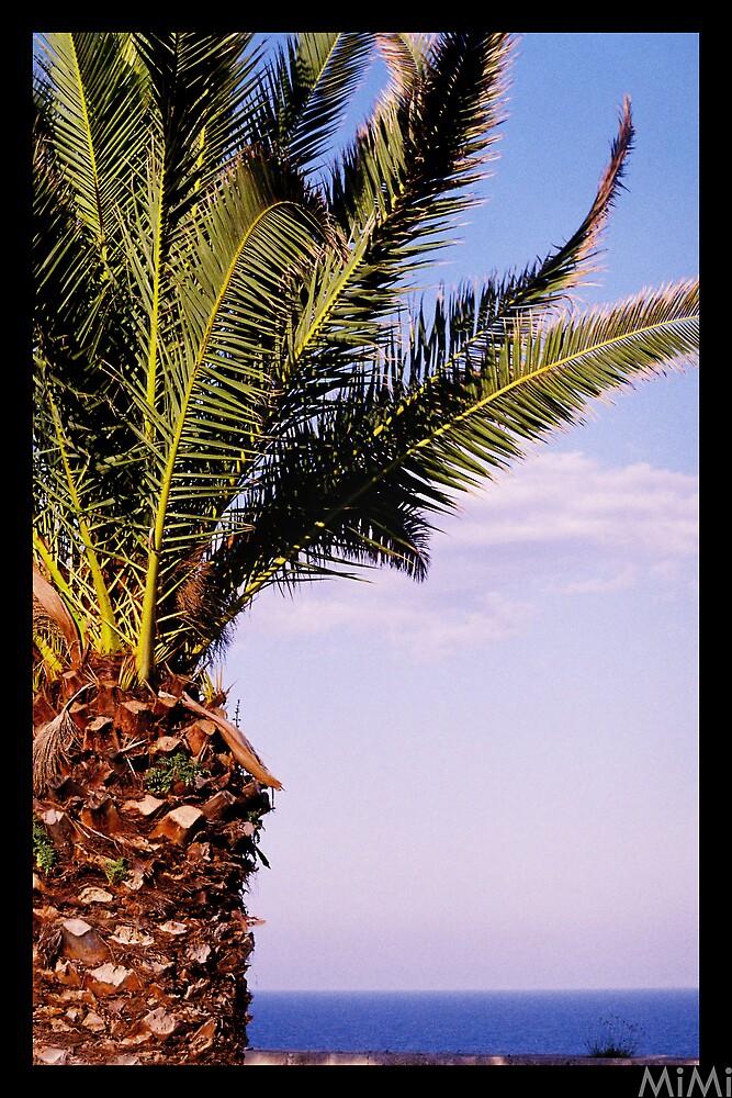 Palm detail by Miriam Casarini