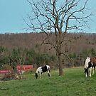 Horses by denise romano