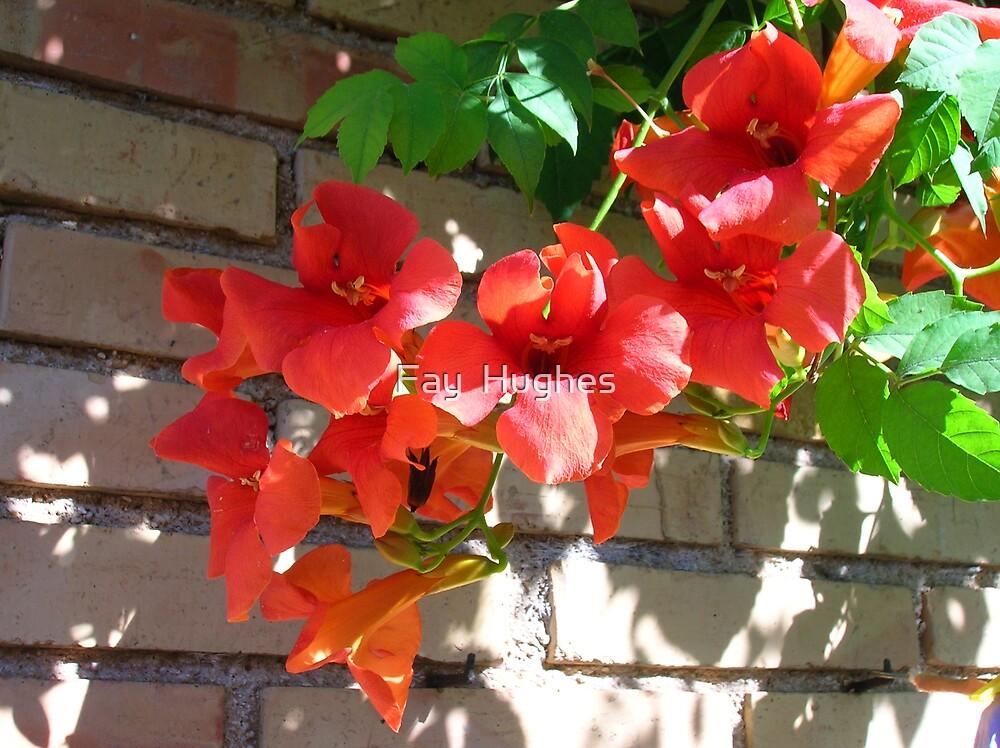 Red climber by Fay  Hughes