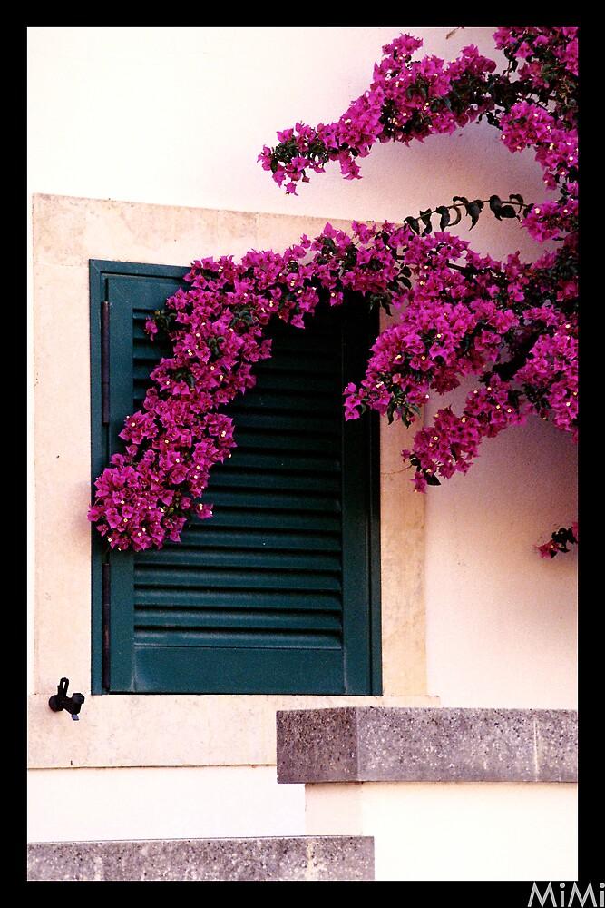 Flowers Window by Miriam Casarini