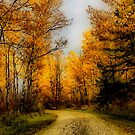 Autumn Colours I by Teresa Zieba