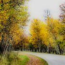 Autumn Colours III by Teresa Zieba